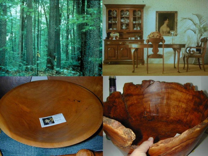 Figure 6: Black Cherry (clockwise from top left: Allegheny Hardwood forest including mature black cherry with its distinctive broken dark gray to black bark, fine furniture utilizing veneer-quality black cherry, black cherry bowls) (Top photos by US Department of Agriculture, Forest Service, Allegheny National Forest; bottom photos by author)